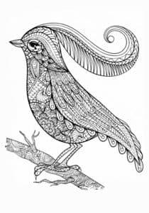 раскраска птица с хохолком
