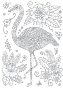 красивое фламинго