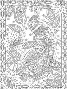 рисунок раскраска павлин