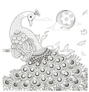 картинка антистресс павлин