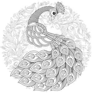 раскраска павлин и узоры