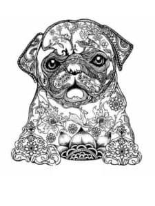 картинка антистресс собака