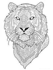 морда тигра раскраска