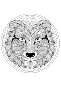 мордочка тигра