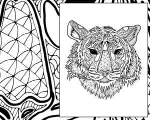 раскраска красивый тигр