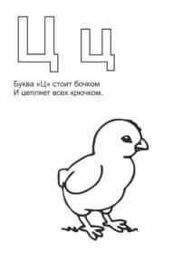 цыпленок красивая раскраска для детей