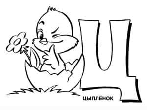 Буква Ц и цыплёнок раскраска