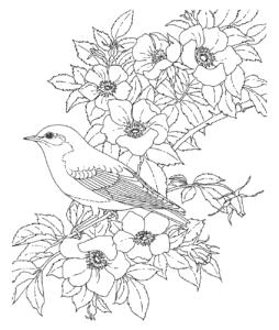 антистресс цветы и птица