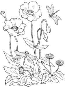 стрекоза и цветы