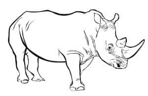 раскраска носорог