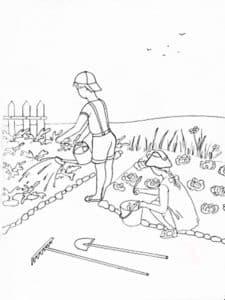 в июле на огороде