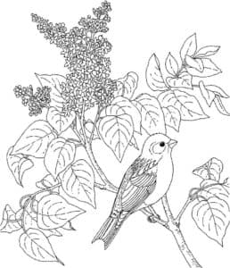 птичка на дереве