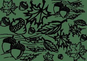 листья и желуди