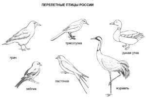 перелетные птицы