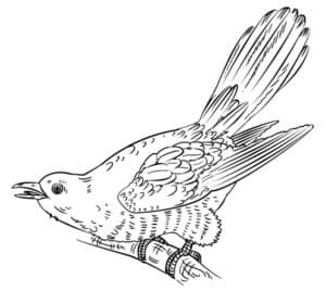 птичка антистресс