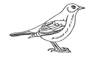 раскраска птичка