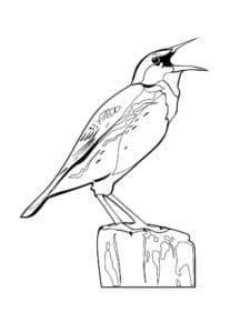 птица на пеньке раскраска