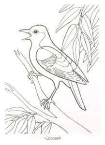 птичка на ветке раскраска