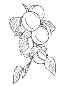 раскраска абрикос