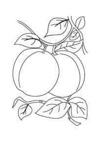 раскраска для детей абрикос