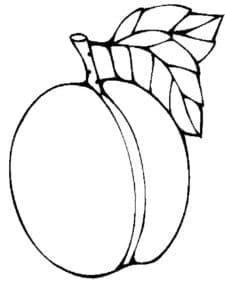 детская раскраска абрикос