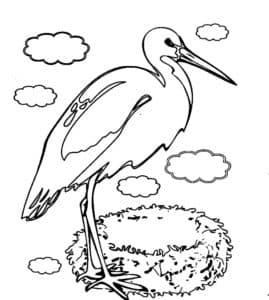 Аист и гнездо