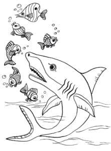 акула с рыбками раскраска