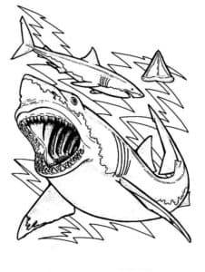 акулы и вода