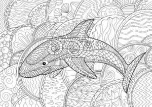 акула антистресс раскраска