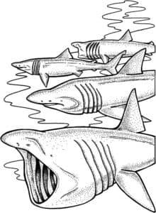 четыре акулы