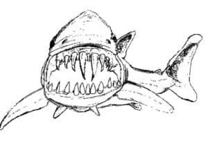 акула с большими зубами