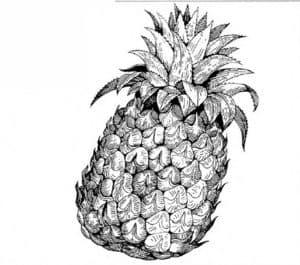 фрукт ананас