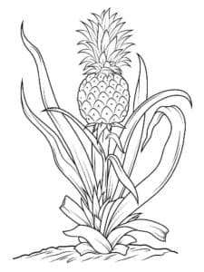 ананас и листья