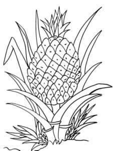 детская раскраска ананас