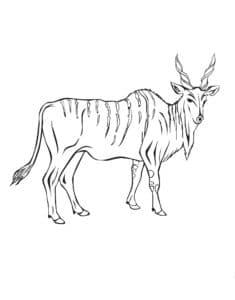 антилопа детская раскраска