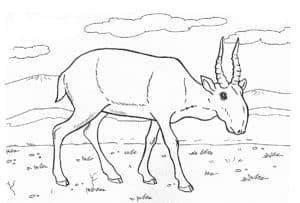 раскраска для детей антилопа
