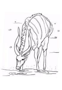 антилопа на водопое