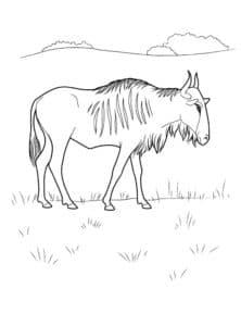 антилопа на поляне