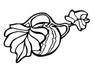 арбуз на грядке