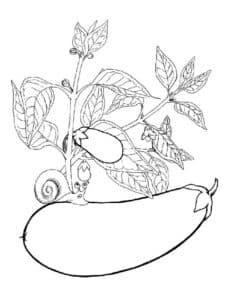 баклажан и улитка