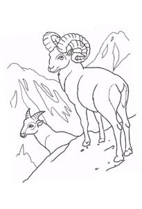 баран и антилопа