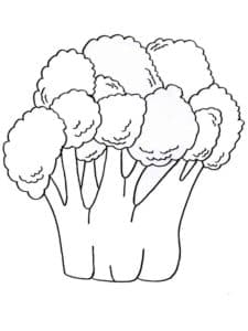детская раскраска брокколи