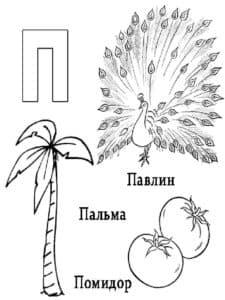 Павлин, Пальма, Помидор