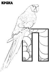 попугай на букве П