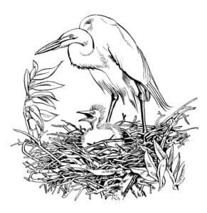 цапля в гнезде