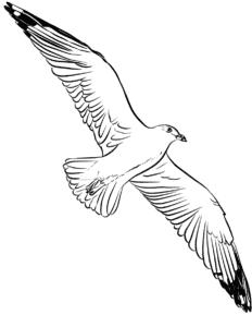 раскраска чайка
