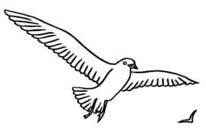 чайка и ласточка
