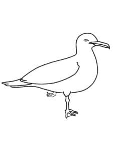 раскраска для детей чайка
