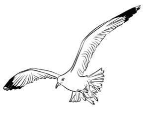 детская раскраска чайка