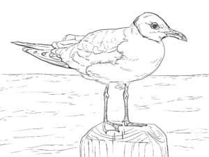 чайка на заборе